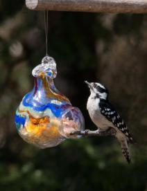 downy-woodpecker-female